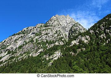 Pine tree wood on a granite mountain
