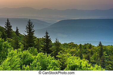 Pine trees and distant mountains, seen from Bear Rocks...