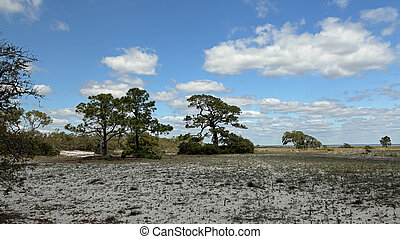 Pine trees and shrubs growing on a sandy island in Florida
