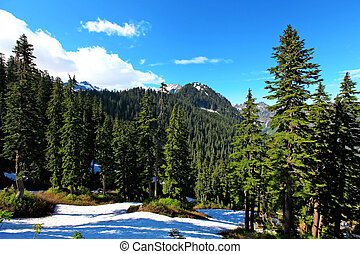Pine trees and snow mountains