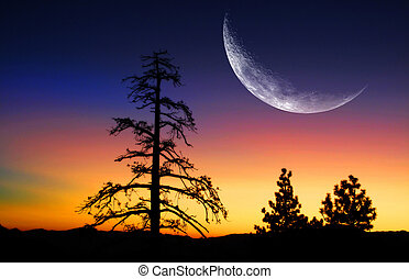 Pine Trees and Sunrise with Moon