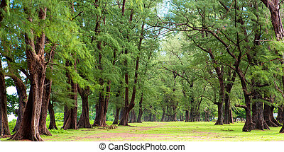 Pine trees are beautiful.