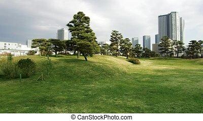pine trees at hamarikyu gardens park in tokyo - nature and...