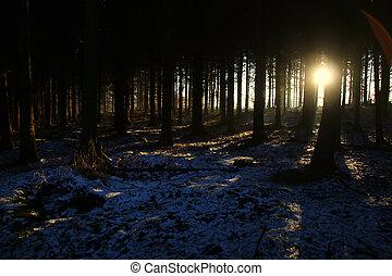 Pine trees at sunrise so adventurous and nice