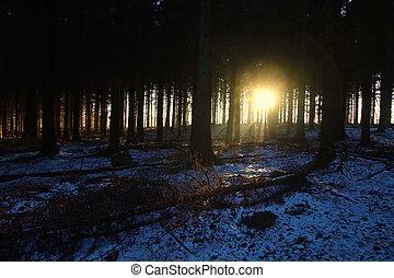 Pine trees at sunrise so lovely