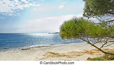 pine trees at the beach