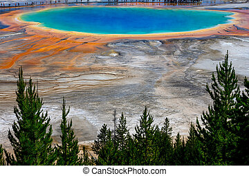 Pine Trees At The Edge of Grand Prismatic spring