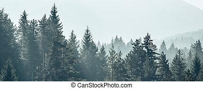 Pine trees black stylized silhouette photo
