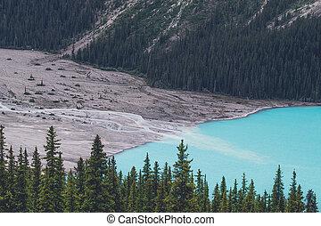 Pine trees by a blue lake