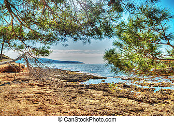 pine trees by the rocky shore