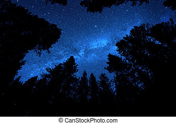 Pine Trees Forest Wilderness with Milky Way Milkyway Stars in Night Sky