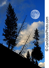Pine Trees Forest with Full Moon