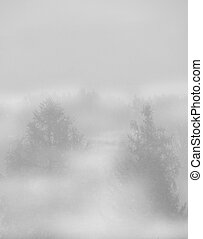 pine trees in fog background