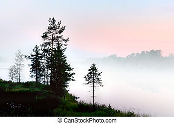 Pine trees in foggy landscape
