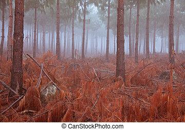 pine trees in mist