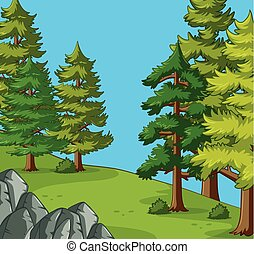 Pine trees in the camping site