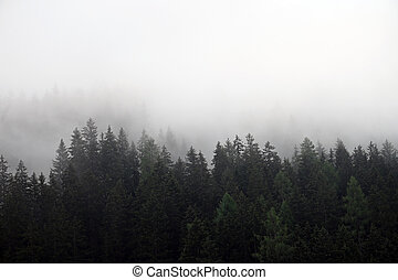 Pine trees in the fog landscape Bad Gastein Austria