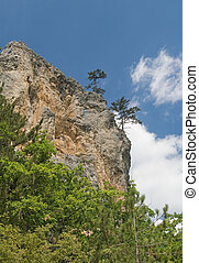 Pine-trees on a cliff