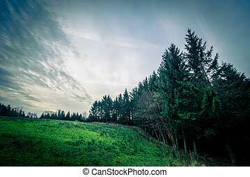 Pine trees on a green field