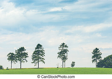 Pine trees on a row