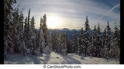 Pine trees on a snowy landscape 4k - Pine trees on a snowy...