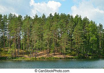 Pine trees on lake
