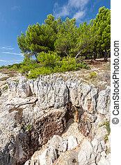 Pine trees on rock in Croatia - The Pine trees on rock in...