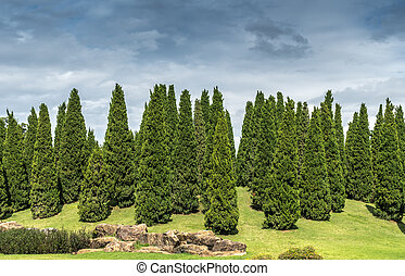 Pine trees on small hill