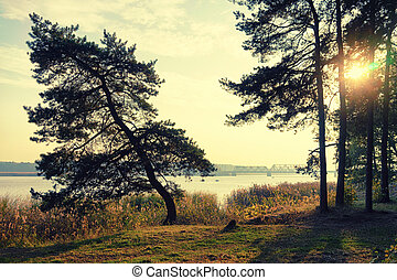 Pine trees on the bank of the river with fishermen and the bridge in autumn