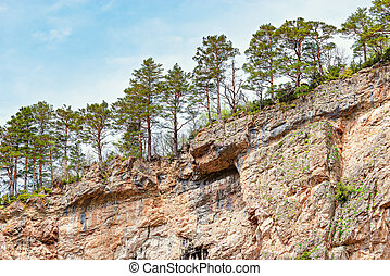 Pine trees on the cliffs in the gorge.