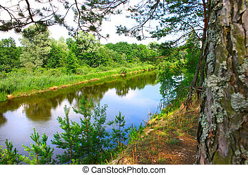 Pine trees on the river bank