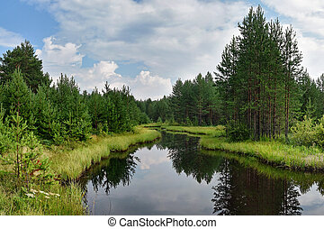 Pine trees on the shore of a forest lake. Summer day and green needles