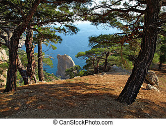 Pine trees on the slope.