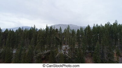 Pine trees overlooking the mountain ranges 4k - Aerial pine...