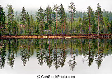 Pine trees reflected in tarn