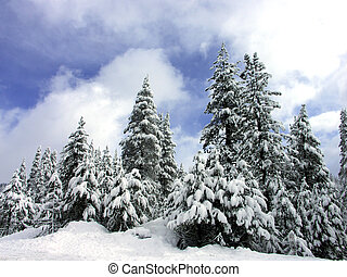 Snow covered pine trees with blue sky and clouds