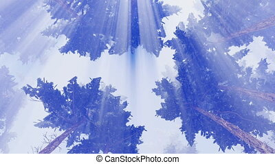 Motion through pine tree crowns to bright sunshine sky. Blank white background at the final of clip. Directly below low angle shot. Realistic 3D animation rendered in 4K