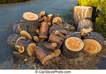Pine wood logs from one pine tree lying in a heap on the ground