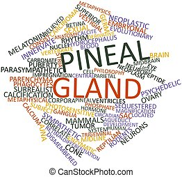 Pineal gland - Abstract word cloud for Pineal gland with...
