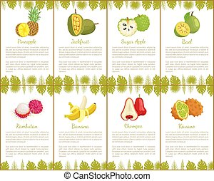 Pineapple and Jackfruit Fruits Posters Set Vector -...