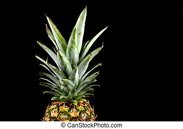 Pineapple Crown on a Black Background