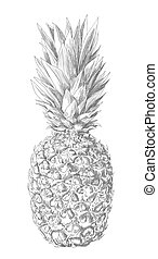 pineapple drawing by hand on white. vector illustration