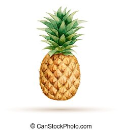 Pineapple hand drawn watercolor, on a white background. ...