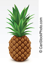 Pineapple - Illustration of fresh pineapple