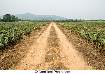 Pineapple on a mountain road