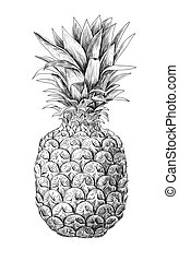 Pineapple, tropical fruit - Pineapple fruit on white...