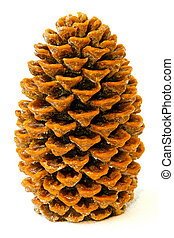 Close up shot of brown wax pinecone
