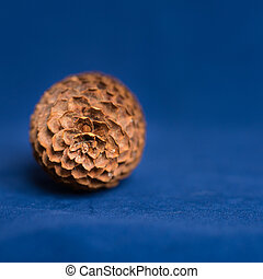 Pinecone on a Rustic Deep Blue Ocean Background