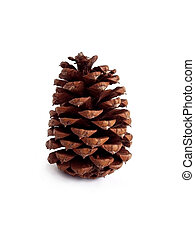 Pinecone - pinecone on white background, natural light.
