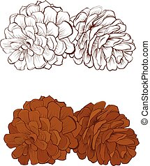 Pinecone Vector illustration isolated